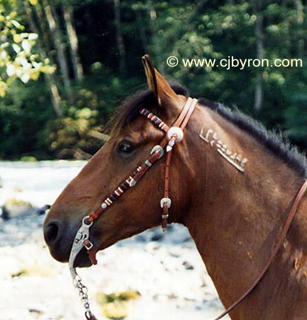 At Circle Four Horse Farm And Ranch Enumclaw Washington