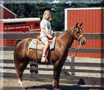 Jennifer on TJ, a quarter horse / morgan